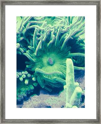 Underwater Life Framed Print by Marlene Williams