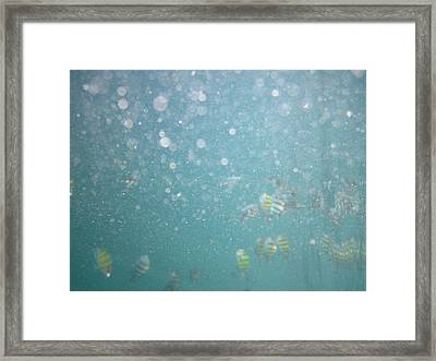 Underwater - Long Boat Tour - Phi Phi Island - 011312 Framed Print by DC Photographer