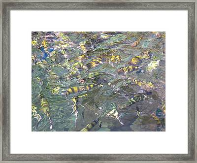 Underwater - Long Boat Tour - Phi Phi Island - 011325 Framed Print by DC Photographer