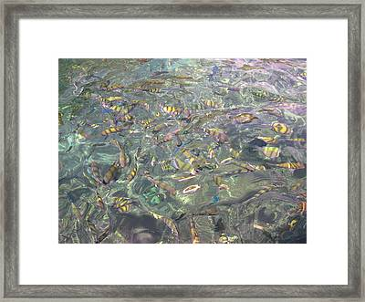 Underwater - Long Boat Tour - Phi Phi Island - 011326 Framed Print by DC Photographer
