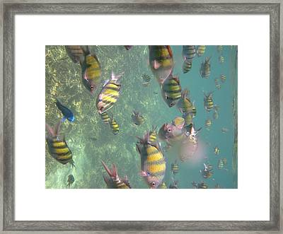 Underwater - Long Boat Tour - Phi Phi Island - 011327 Framed Print by DC Photographer