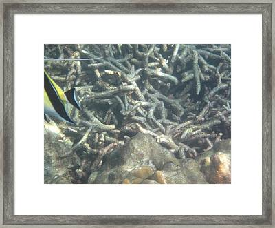 Underwater - Long Boat Tour - Phi Phi Island - 011334 Framed Print by DC Photographer