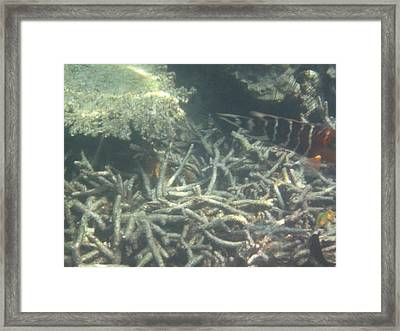 Underwater - Long Boat Tour - Phi Phi Island - 011336 Framed Print by DC Photographer