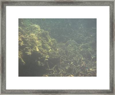 Underwater - Long Boat Tour - Phi Phi Island - 011338 Framed Print by DC Photographer