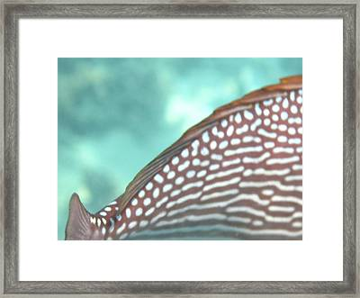 Underwater - Long Boat Tour - Phi Phi Island - 011342 Framed Print by DC Photographer