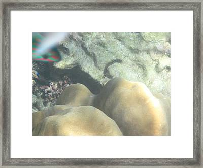 Underwater - Long Boat Tour - Phi Phi Island - 011343 Framed Print by DC Photographer
