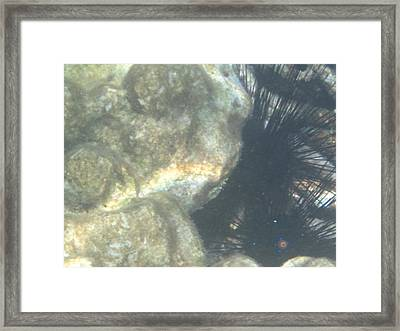 Underwater - Long Boat Tour - Phi Phi Island - 011344 Framed Print by DC Photographer