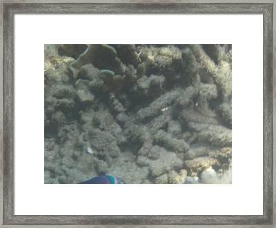 Underwater - Long Boat Tour - Phi Phi Island - 011356 Framed Print