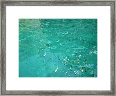 Underwater - Long Boat Tour - Phi Phi Island - 01136 Framed Print by DC Photographer