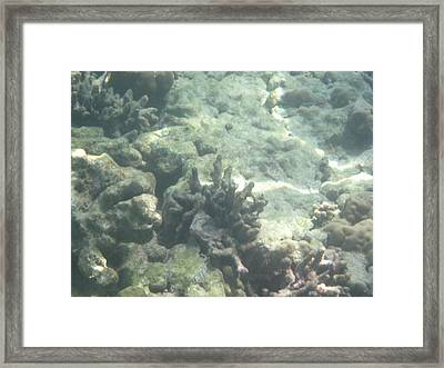 Underwater - Long Boat Tour - Phi Phi Island - 011368 Framed Print by DC Photographer