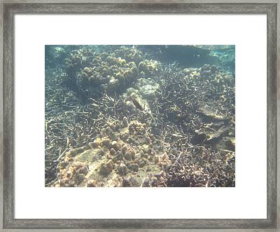 Underwater - Long Boat Tour - Phi Phi Island - 011375 Framed Print by DC Photographer