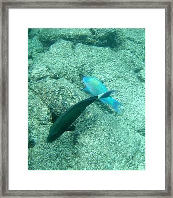 Underwater Pair Framed Print by Karen Nicholson