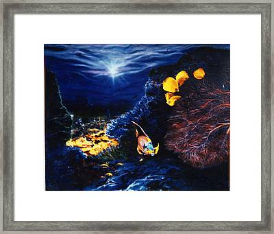 Underwater Paradise Framed Print by Dan Townsend