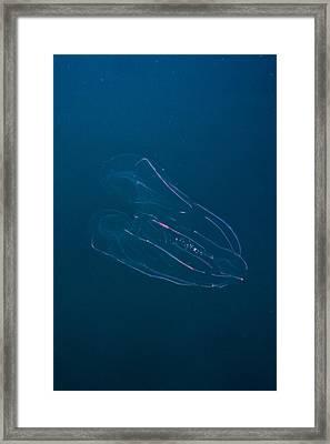 Underwater Rainbow Jellyfish Framed Print