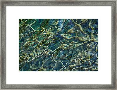 Underwater Roots Framed Print