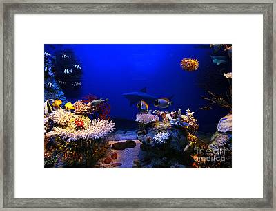 Underwater Scene Framed Print by Michal Bednarek