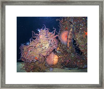 Underwater Sea Life Framed Print by Christine Drake