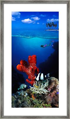 Underwater View Of Sea Anemone Framed Print by Panoramic Images