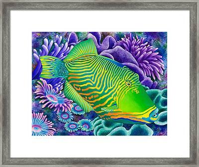 Undulated Trigger Fish Framed Print by Carolyn Steele