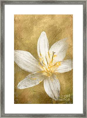Undying Love Framed Print by Jorgo Photography - Wall Art Gallery