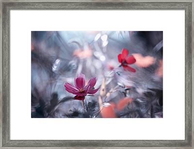 Une Autre Fleur, Une Autre Histoire Framed Print