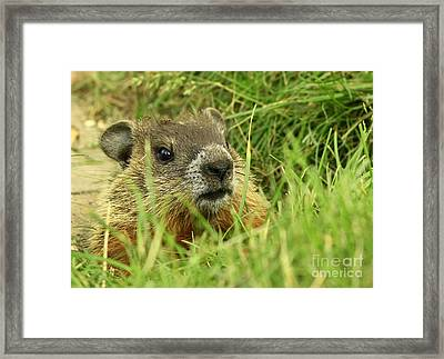 Unexpected Company Framed Print by Inspired Nature Photography Fine Art Photography