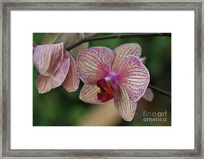 Unfolding Bloom Framed Print