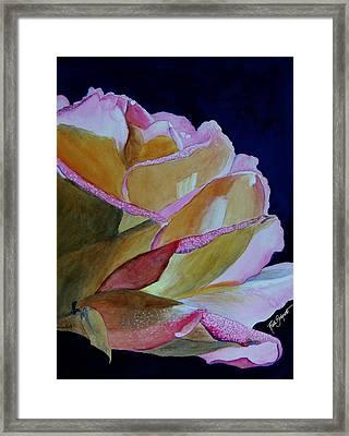 Unfolding Rose Framed Print by Ruth Bodycott