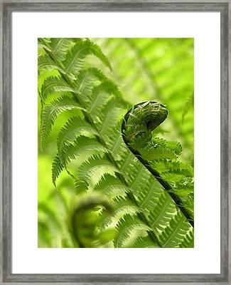 Unfurling Framed Print by Julie Grandfield