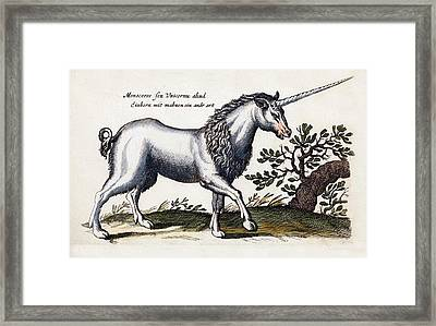 Unicorn Framed Print by Paul D Stewart