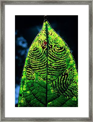 Unidentified Fungus On Rain Forest Leaf Framed Print by Dr Morley Read/science Photo Library