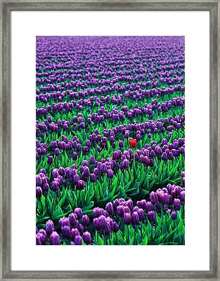 Unique Framed Print by Benjamin Yeager