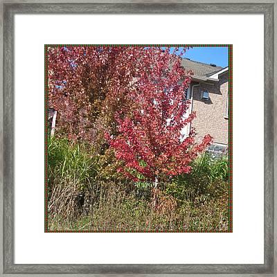 Unique Fall Season Color Garden Park Neighbourhood In Oakville Ontario Canada   Framed Print