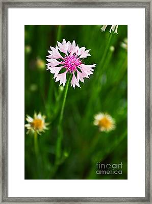 Unique Values Framed Print by Syed Aqueel