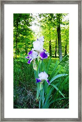 Uniquity  Framed Print by Tracey Griffor