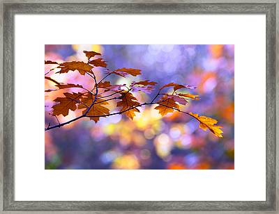 United Colours Of Autumn II Framed Print by Roeselien Raimond