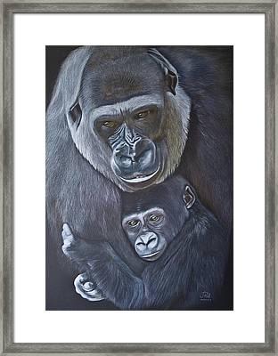 United - Western Lowland Gorillas Framed Print by Jill Parry
