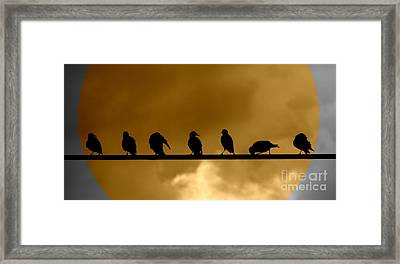 Framed Print featuring the photograph Unity Is Strength by France Laliberte