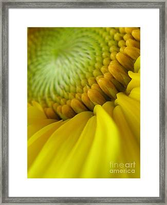 Unity Photography Framed Print