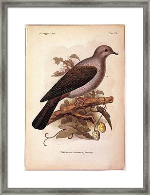 Unknown, Color Lithographs Framed Print by Everett