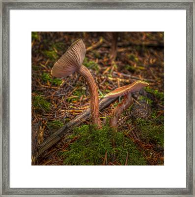 Unlikely Pair Framed Print by Jean Noren