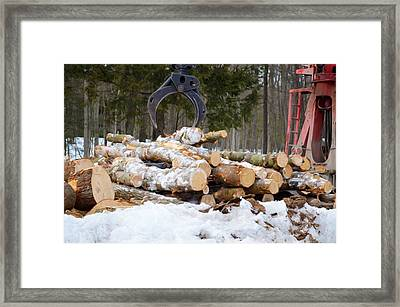 Unloading Firewood 3 Framed Print by Lanjee Chee