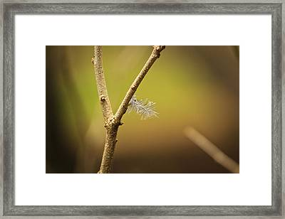 Unmoved By The Shifting Wind... Framed Print