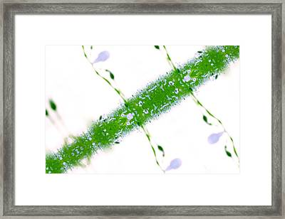 Unnatural 67 Framed Print