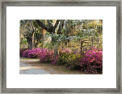 Framed Print featuring the photograph Unpaved Road In Spring by Bradford Martin