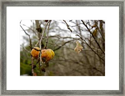 Framed Print featuring the photograph Unpicked by Alice Mainville