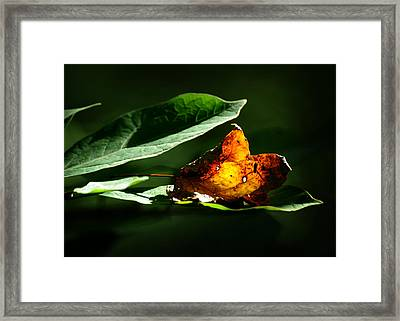 Unquenchable Framed Print by Rebecca Sherman