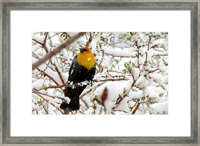 Unruffled Framed Print by Brenda Pressnall