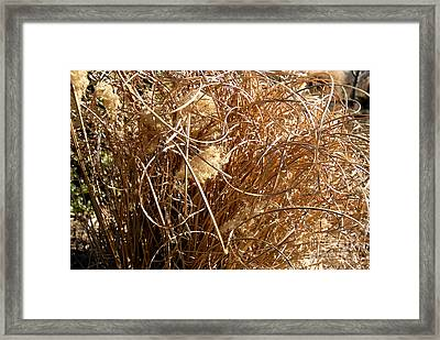 Framed Print featuring the photograph Unruly Curls by Lena Wilhite