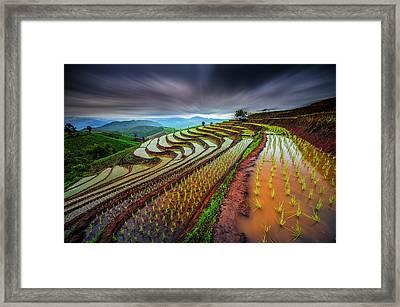 Unseen Rice Field Framed Print